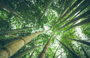If you've never seen a bamboo forest, take a chance to do so when exploring Toronto.
