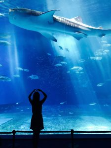 A girl watching a shark in a tank, enjoying one of the best summer activities in Toronto.