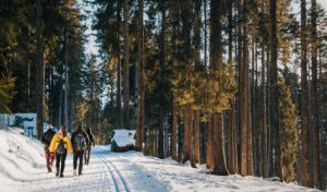 People hiking in forest in winter