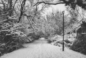 A road and forest covered in snow in one of the best winter vacation spots in Canada